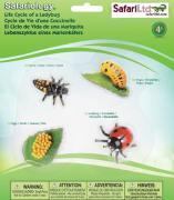 Life Cycle of a Ladybug - 4 Realistic Models