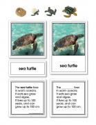 Green Sea Turtle Life Cycle Activity Set