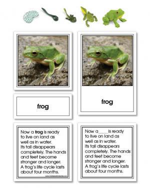 Frog Life Cycle Activity Set